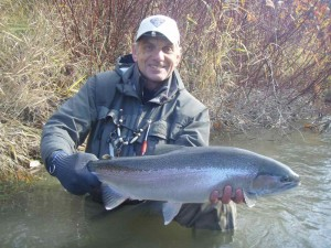 Doug Swift's Chrome Steelhead on the Nottawasaga on a Swung Fly