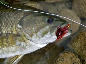 Grand River Streamer Smallmouth Bass